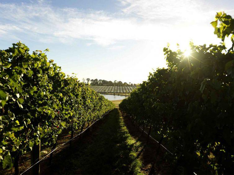 vineyard update hero